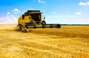 Combine Harvester on the field