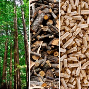 Transformation  from tree to wood pellets